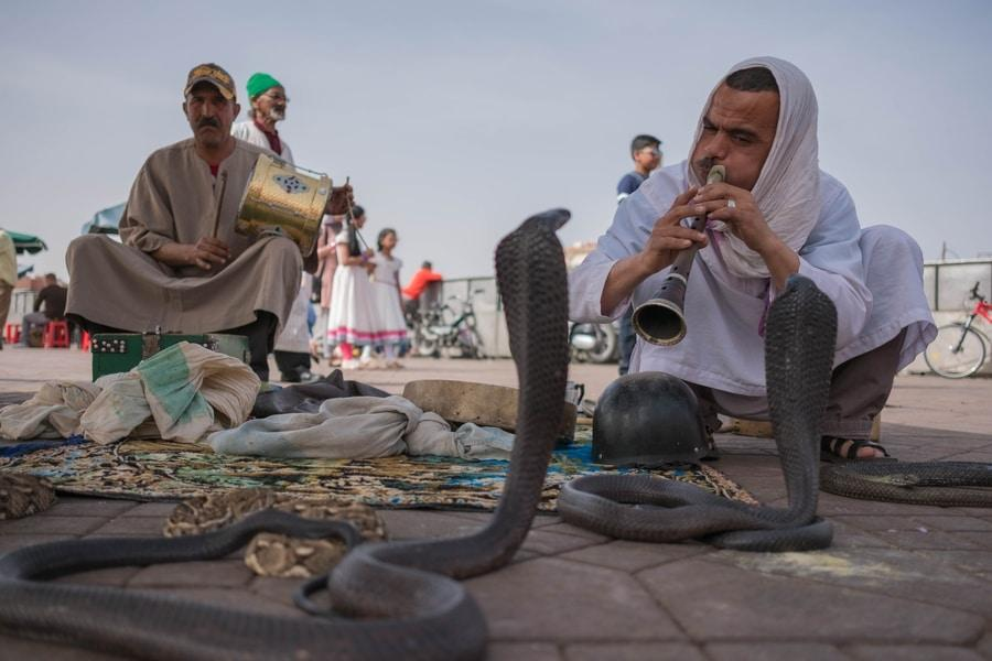 Main market square, Snakes, Marrakesh, Morocco. מרקש, שוק גמ'ע אל פנה
