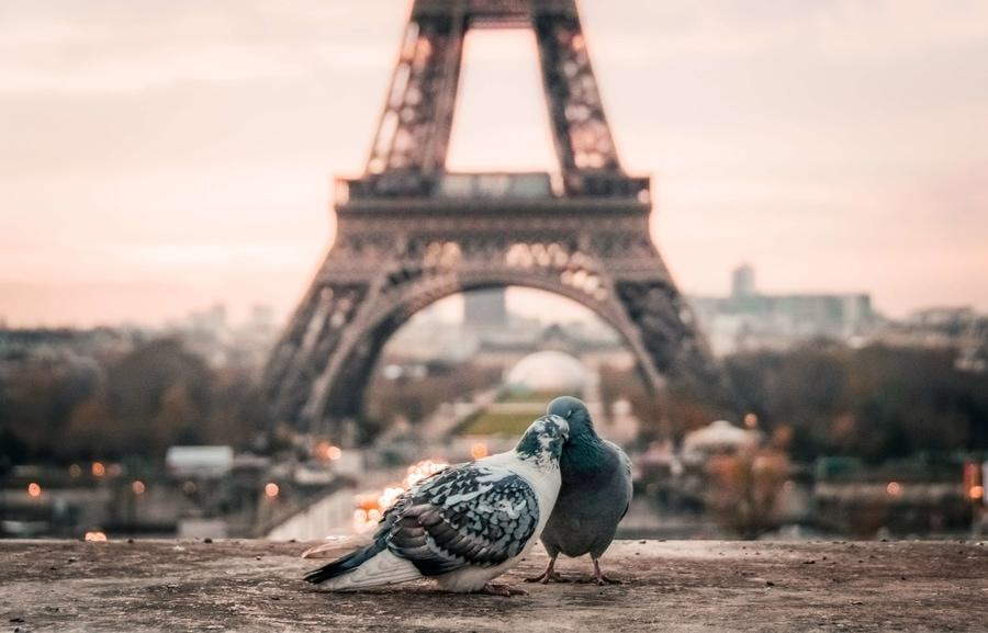 Books that take place around the world. Paris.
